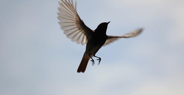 bird-816267_640